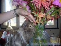 06-fleurs-mika