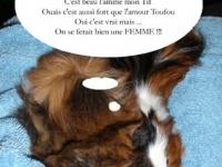 Tif et Toufou