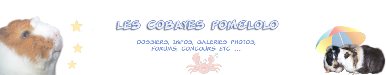 Les Cobayes Pom&Lolo